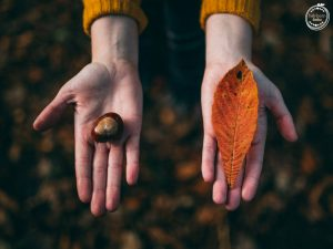 Still life of a person holding an acorn in one hand and a leaf in the other.